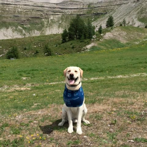 hotel pet friendly a campiglio