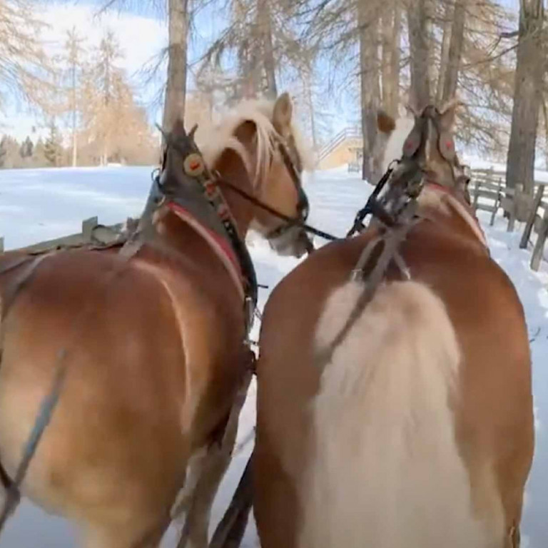 Carriage's Tours on the snow trentino campiglio